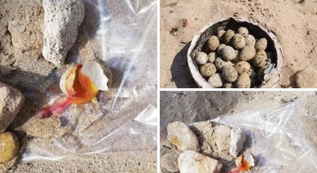 Una delle uova frantumate sulla spiaggia di Torre Ovo
