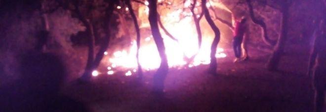 L'incendio divampato nella pineta
