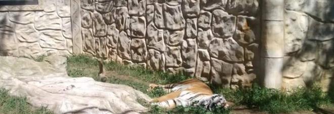 Zoo chiuso da due mesi ma gli animali sono ancora lì (e rischiano di morire)