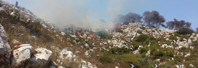 Fiamme nel Parco regionale: distrutta la macchia mediterranea