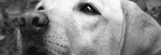 """Morto 'Cannella', il cane dottore dei bimbi: """"Ha regalato sorrisi a centinaia di malati"""""""