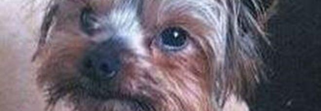 Strali di don Marco contro chi spende troppo pr i cani (archivio)
