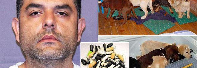 La terribile fine dei cani imbottiti di eroina per passare la frontiera: catturato veterinario