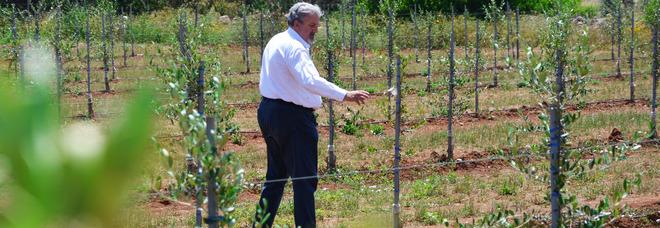 Xylella, Emiliano visita i campi sperimentali del Salento: «Segni di speranza»