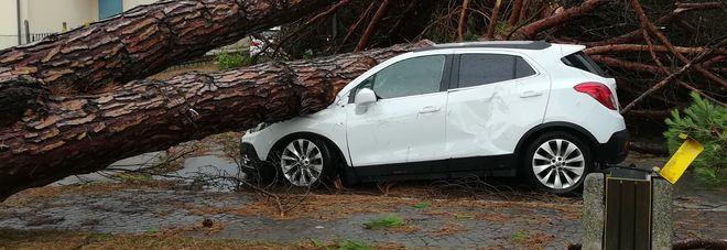 Gli alberi caduti in piazza della Repubblica a Porto Viro