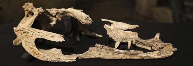 Napoli, spunta un coccodrillo antico nel sottosuolo: «Può essere quello della leggenda»