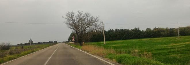 Con l'auto contro un albero: grave una giovane driver