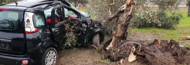 Perde il controllo dell'auto e sbatte contro un albero d'ulivo: donna in ospedale