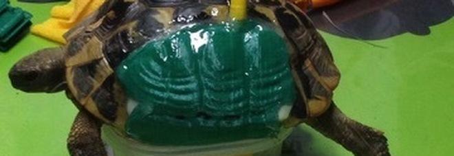 """Un """"guscio"""" nuovo (stampato in 3D): salva la tartaruga finita sotto l'auto"""