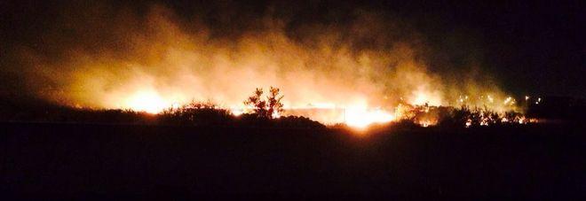 Incendio nel cuore del Salento: in cenere mille ulivi