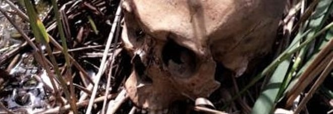 Un teschio umano fra i canneti: macabra scoperta nella Riserva. Aperte le indagini