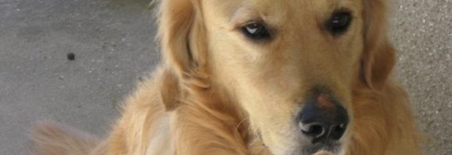 Il cane abbaia, il vicino gli spara un colpo di fucile