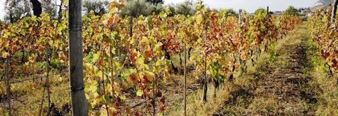 In Puglia emergenza siccità «Distrutti i nostri raccolti»