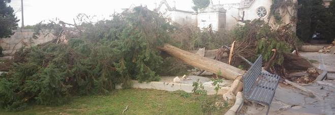 Tromba d'aria devasta il paese: abbattuti alberi e panchine