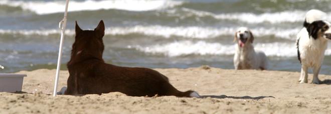 Cani in spiaggia, l'appello delle associazioni: «La Regione non limiti l'accesso»