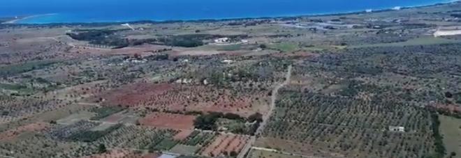 Il Salento devastato dalla xylella: le immagini choc dall'elicottero. Il ministro: «Pelle d'oca, chiedo scusa: lo Stato ha fallito»