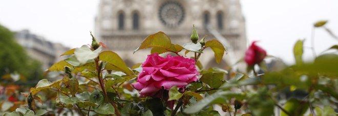 Notre Dame de Paris, il romanzo di Victor Hugo balza in vetta alle vendite su Amazon