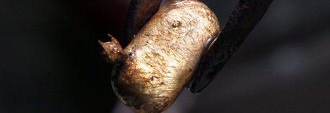 Trovata una pepita d'oro da un chilo e mezzo in Australia con il metal detector: vale 70mila euro