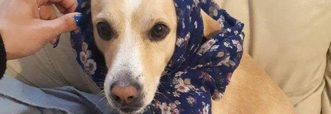 Remì, il cane ucciso da un'arma da fuoco