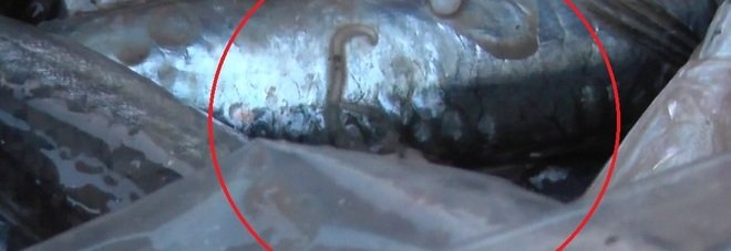 Gallipoli, blitz al mercato ittico, sulle bancarelle abusive anche pesce crudo con Anisakis