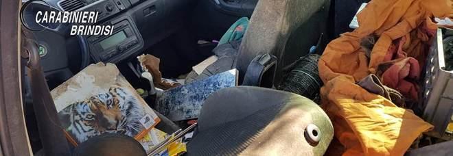 L'auto in cui sono stati trovati i cani