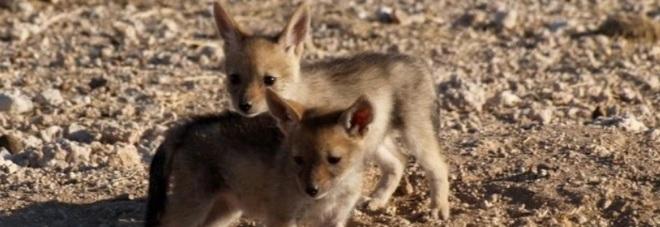 Credeva di aver salvato dei teneri cuccioli, ma fa una scoperta inquietante