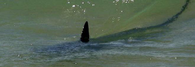 Otranto, squalo di tre metri ritrovato sulla scogliera