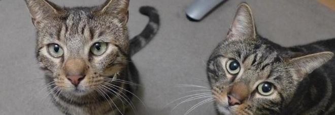 Teddy e Bear, i due fratelli felini