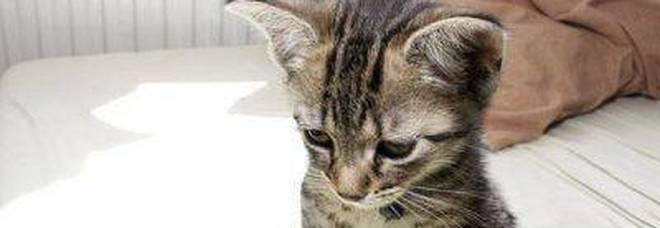 Torturano un gattino appendendolo per le zampe La rabbia su Facebook: «Troviamo queste bestie»