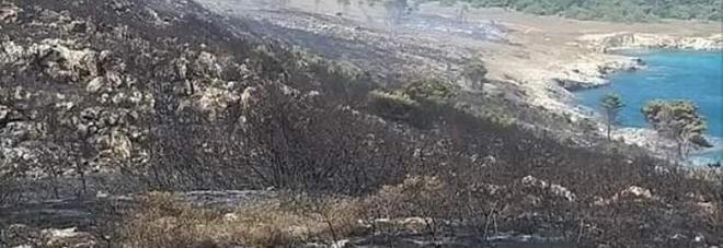 I piromani distruggono l'Orte: 100 ettari in fumo. Il paesaggio del Parco è spettrale