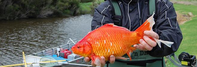 (Foto Freshwater Fish Group)
