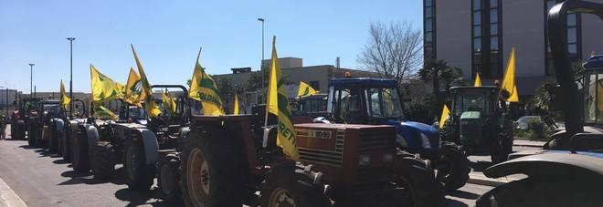 Xylella, imprenditori agricoli in rivolta a Lecce: contestato Emiliano