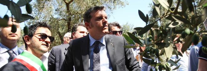 Il ministro: «Ho visto gli uliveti distrutti. Ora basta, faremo di tutto per fermare la xylella»