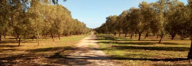 Un tratto della Via Francigena tra Brindisi e Lecce