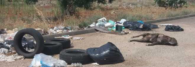 Un cane morto abbandonato tra i rifiuti sul corpo evidenti segni di ferite