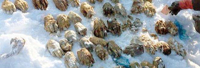 Orrore sulle sponde di un fiume: pescatore trova 54 mani in un sacco