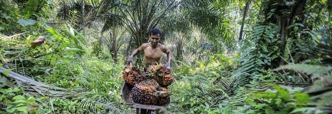 Dazi Ue sul biodiesel indonesiano, è sovvenzionato
