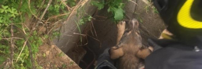 Due cagnolini finiscono in un pozzo: salvati dai vigili del fuoco