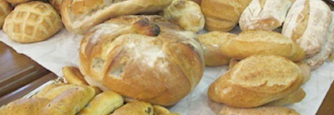 Università, a Bari realizzato il primo pane di grano senza glutine
