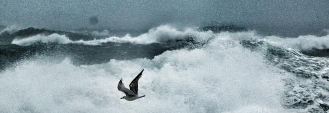 Brindisi, lo spettacolo di onde e gabbiani sul mare in tempesta
