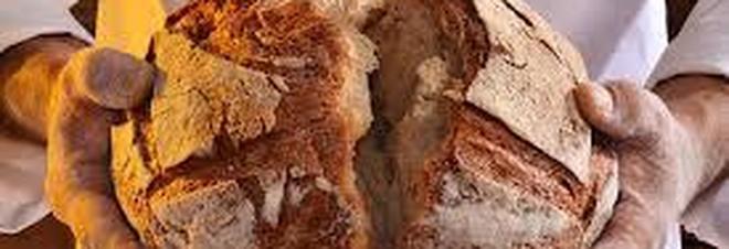 Farina conservata fra ragnatele, unto e muffe: nei guai un fornaio