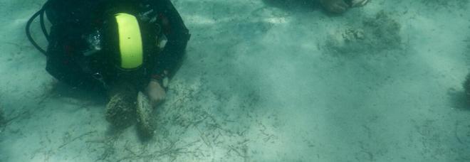 Allarme nello Jonio: sui fondali la moria di Pinna Nobilis
