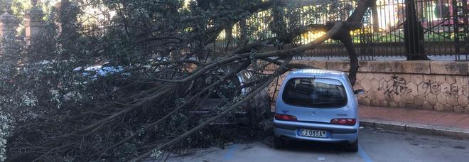 Il vento abbatte gli alberi, scene di panico in città. Auto danneggiate