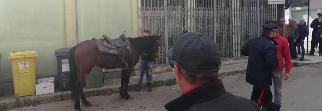 Pitbull azzanna un cavallo: ferito anche il giovane fantino