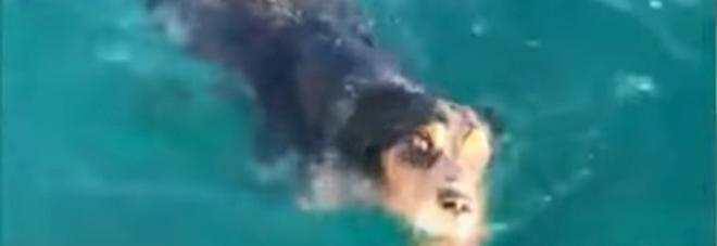 Stremato e solo in mare: un cagnolino salvato a due miglia dalla costa