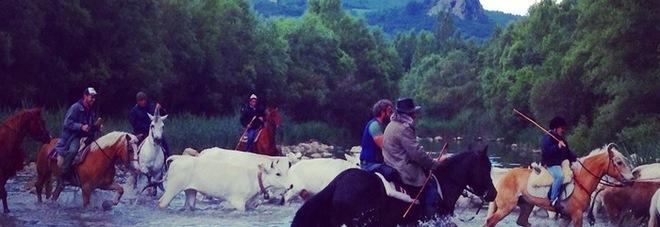 Transumanza, si ripete il rito tra Puglia e Molise