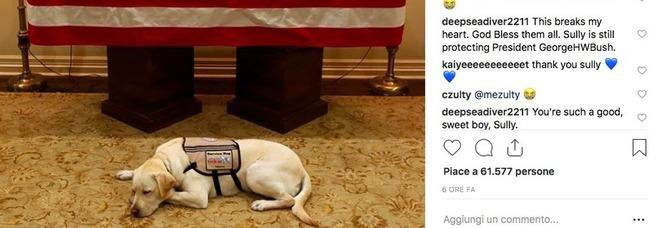 Sully, il cane di George H.W. Bush veglia il suo padrone: le foto commuovono il web