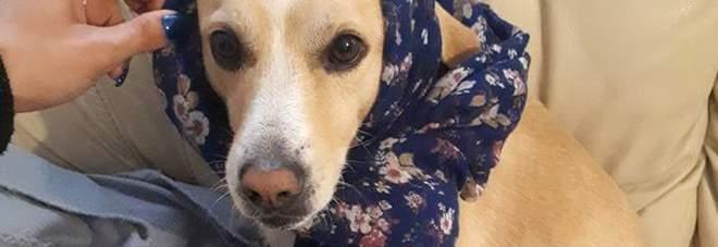 Cane fucilato: individuato e denunciato l'autore dell'uccisione