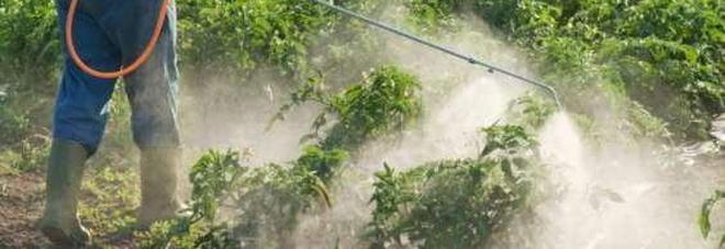 Aveva la passione dell'orto: muore avvelenato dai pesticidi che usava