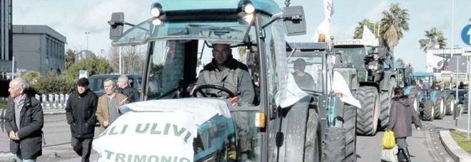 Xylella, Coldiretti prepara per sabato la marcia dei trattori su Lecce